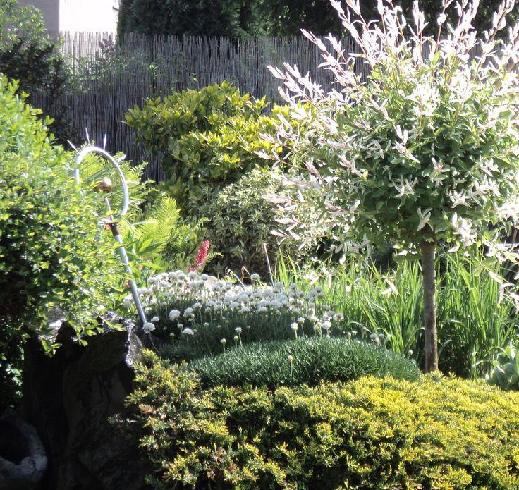 Japonská vrba, trávnička, aukuba,... květen 2016