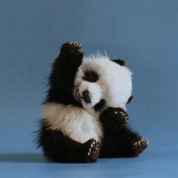 Well, hello there baby panda. High five!