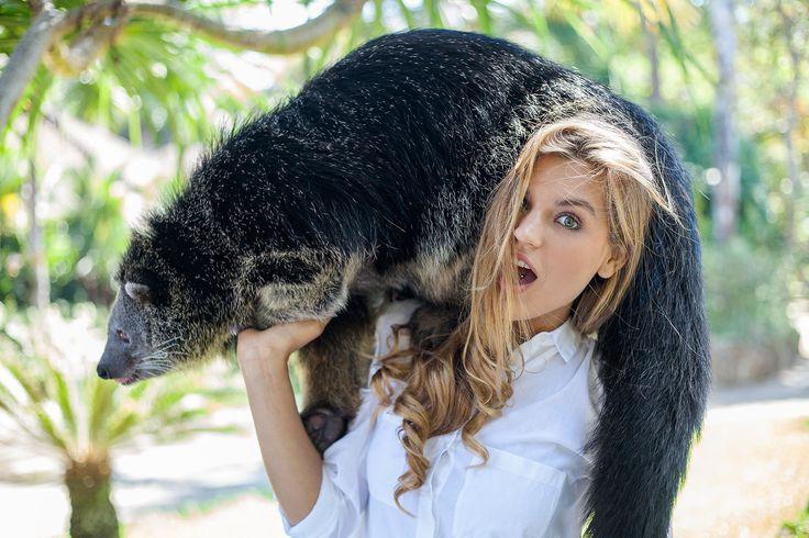 Animal encounter with Binturong, bearcat at Bali Zoo