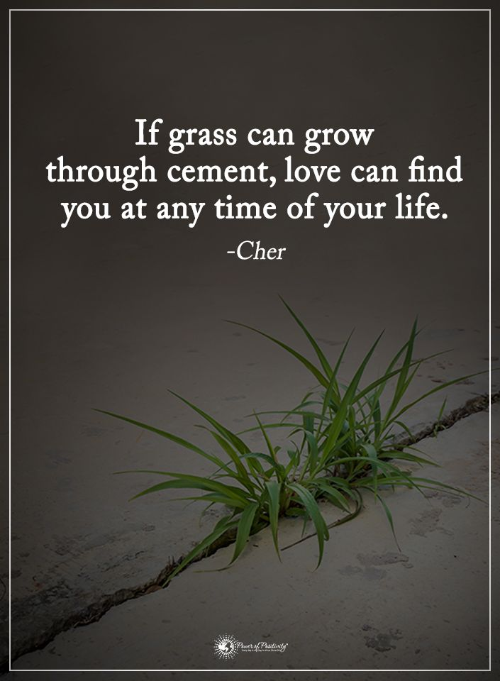 If grass can grow through cement, love can find you at any time of your life. - Cher  #powerofpositivity #positivewords  #positivethinking #inspirationalquote #motivationalquotes #quotes #life #love #hope #faith #respect #grow #through #time #find