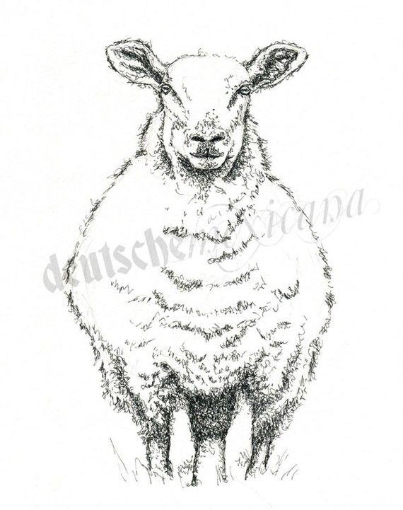 Best 25 sheep drawing ideas on pinterest how to draw sheep sheep pen and ink drawing ccuart Image collections