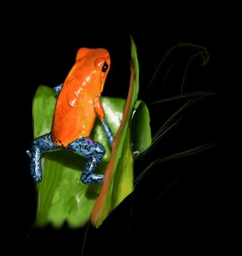 My first try to draw digitally with colors, I guess it is a frog from the Amazon rainforest :D