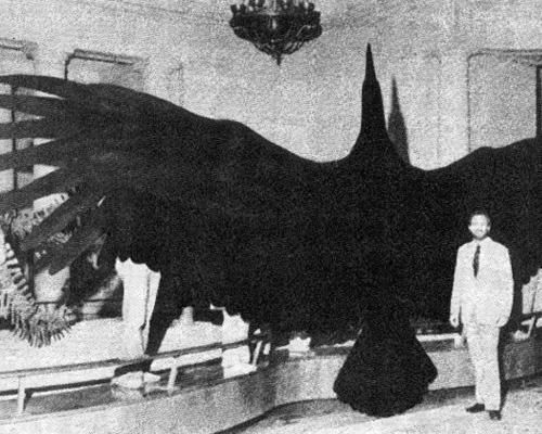 """Argentavis magnificens (literally """"magnificent Argentine bird"""") is the largest flying bird ever discovered. This bird, sometimes called the Giant Teratorn, is an extinct species known from three sites from the late Miocene (6 million years before present) of central and northwestern Argentina."""