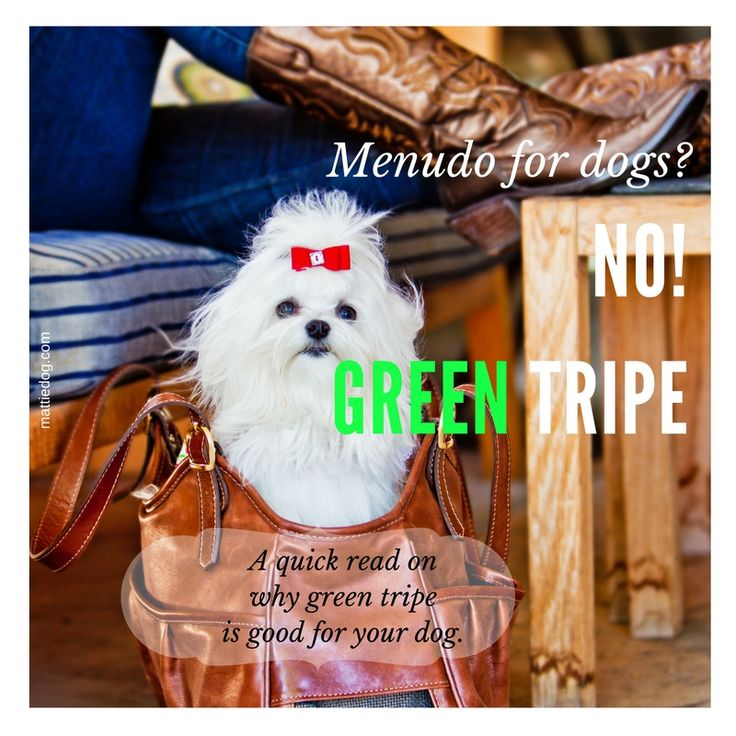 Growing up making menudo (a tripe-based soup) I thought it was stinky. Shocker! Green tripe is great for dogs!