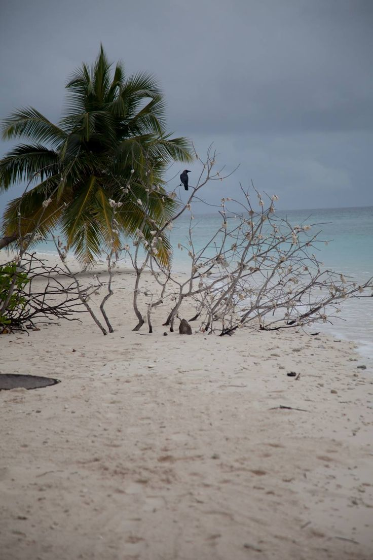 Filitheyo Island, Maldives, paradise on earth, travel, vacation, beautiful place, wanderlust, tropic, palm tree, bird  On a bad day!