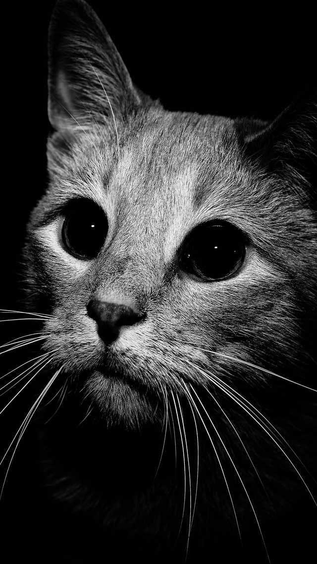 50 Phone Wallpapers All 4k No Watermarks Post Samsung Wallpaper Cat Wallpaper Animals