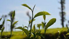 A szódabikarbóna 12 féle felhasználása a kertben | Sokszínű vidék
