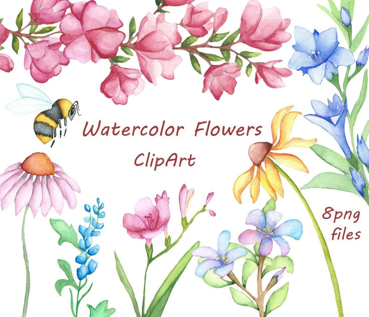 Clip Art Watercolor Clipart 1000 images about love watercolor on pinterest flower flowers clipart digital clip art hand painted
