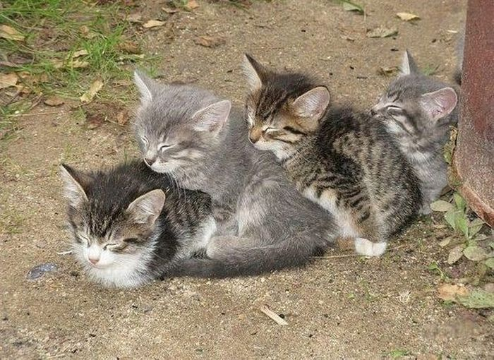 A hill of kittens.