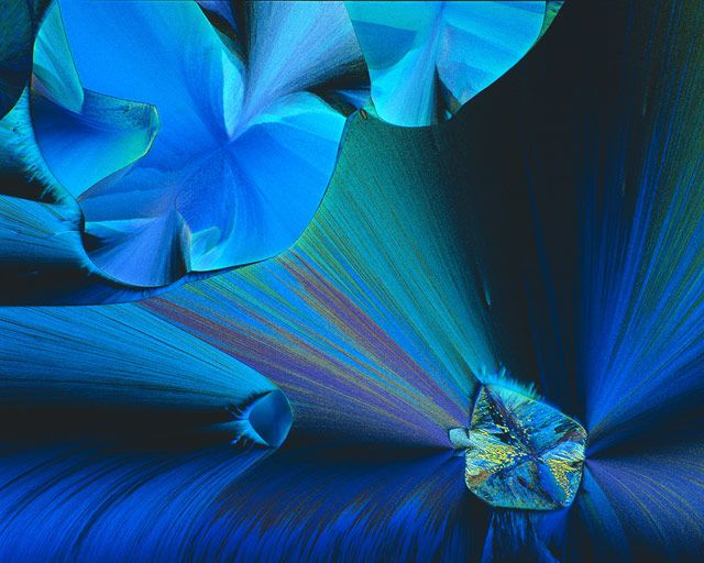 Crystallized acetaldehyde and methylene blue | John Hart | Nikon's Small World