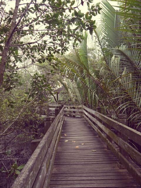 the walking pathways in Sungei Buloh