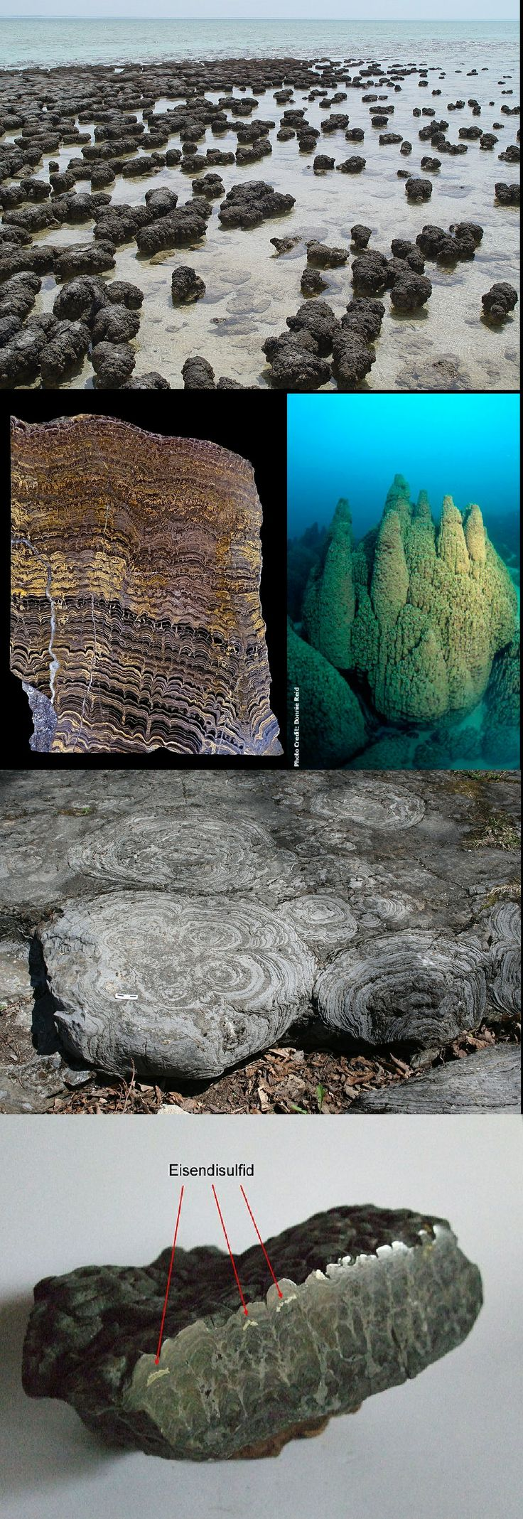 The oldest fossil records of life on earth, 3.5 billions of years old are stromatolites, formed by cyanobacteria found on the coast of australia