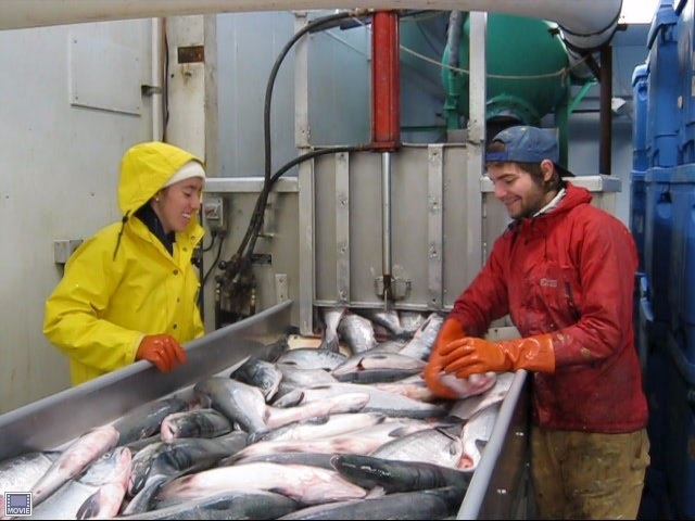 Leader Creek Fisheries Sockeye Salmon Processing Jobs In Naknek Alaska Sockeye Salmon Sockeye Salmon Fishing