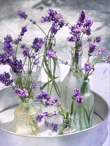 Lavender in a variety of bottles...