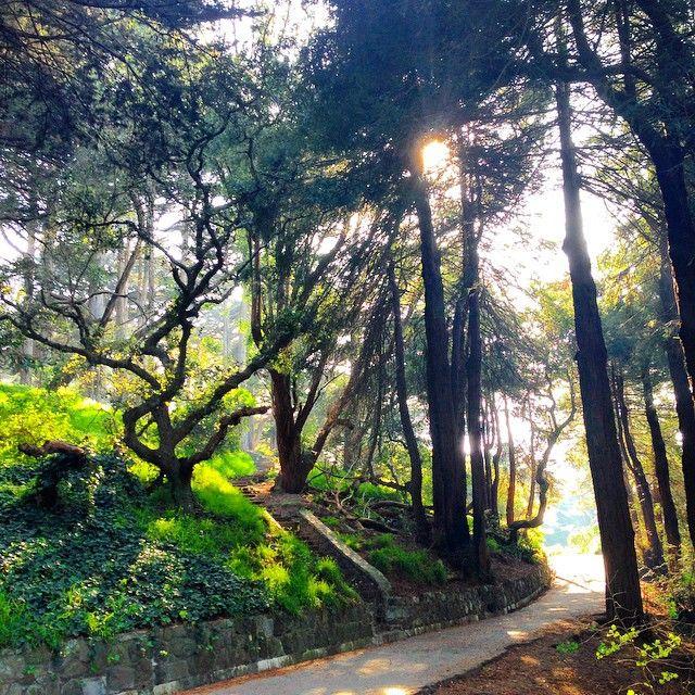 Buena Vista Park, San Fran