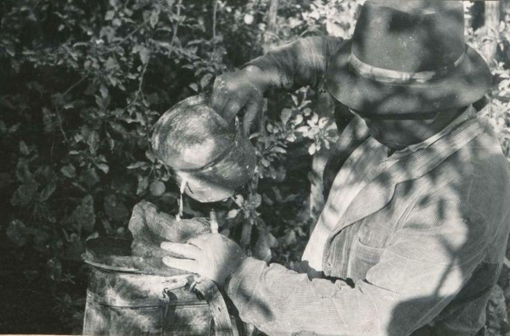 A permetlé felöntése a permetezőgépbe szűrőn át. Kéleshalom, 1966.