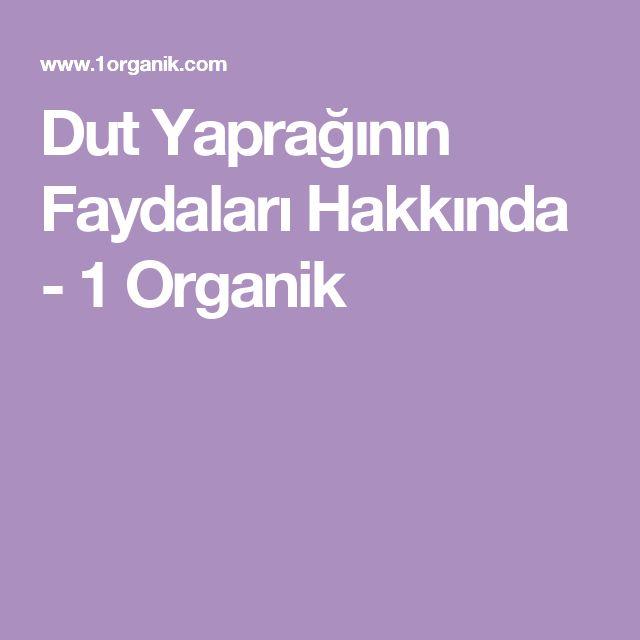 Dut Yaprağının Faydaları Hakkında - 1 Organik