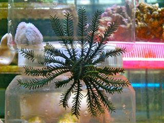 All kinds of aquarium services in Cranbrook area, supplies aquariums at an affordable rate in Townsville.