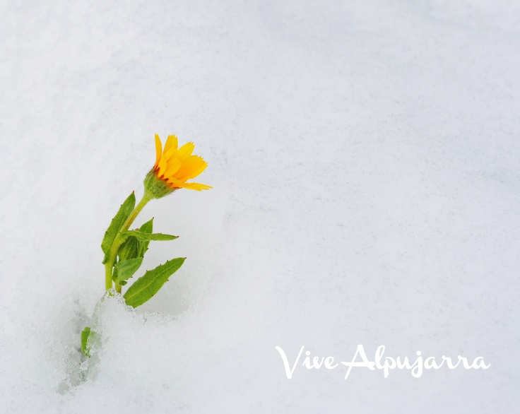 Llega la Primavera a La Alpujarra. Vive Alpujarra