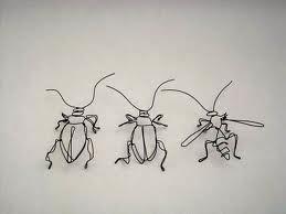 Insectes non ravageurs