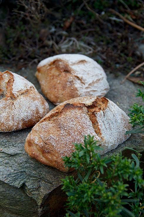 Dinkelhinkel - Plötzblog - Selbst gutes Brot backenPlötzblog – Selbst gutes Brot backen