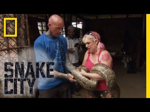 Twisted Python | Snake City - YouTube | Snakes in the City