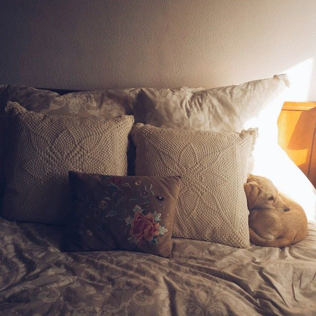#mutt #dog #athome #bedroom #interiordesign #pillow #light #cute