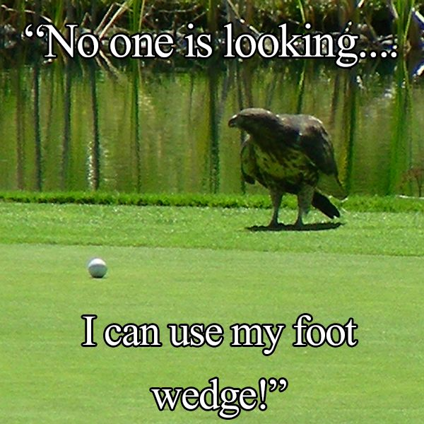 The Eagle Has Landed Quote: 77 Best Golfer's Grail Humor Images On Pinterest
