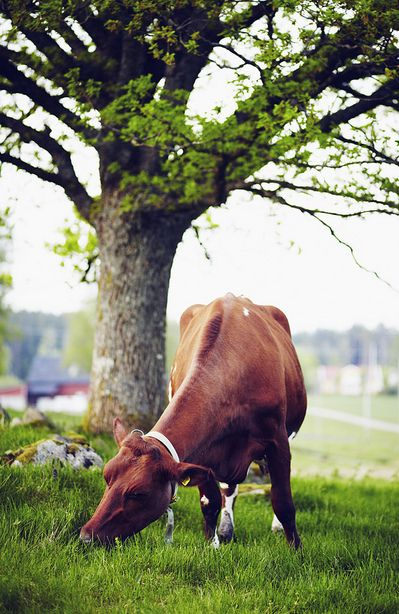 Did you ever think that beef could be so healthy?  It is, if it's grass-fed!
