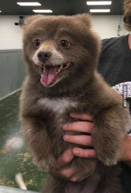 Somebody brought this bear into doggie day care.