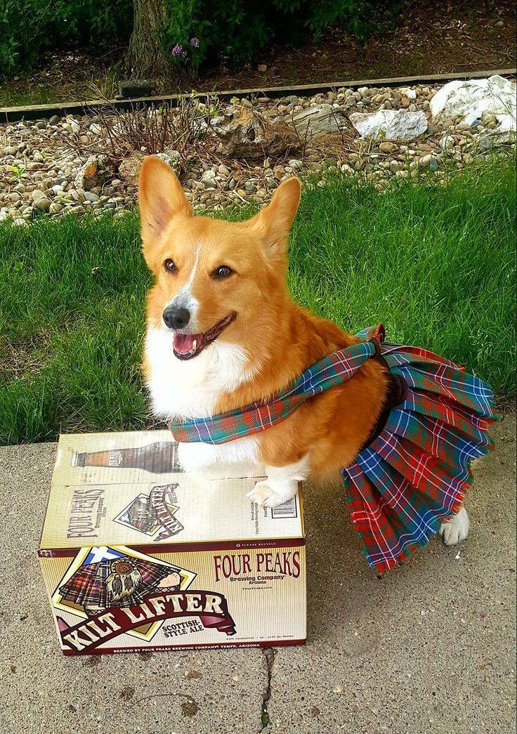 Isn't Radar O'Reilly a bonnie lass in her Clan Tartan? Mom, Czesia Goetz had the fabric shipped from Scotland for this custom kilt. #cuteoverload
