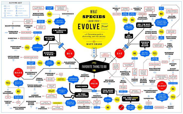 What Species Did You Evolve From? - Matt Chase | Design, Illustration