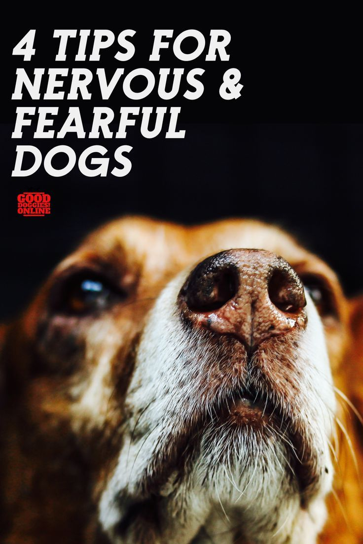 4 Tips For Nervous And Fearful Dogs Dogs Dog Training Dog
