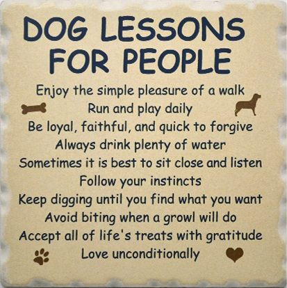 Quotes About Pet Dogs | Favorite-Dog-Sayings-Coaster-Set-1752-Dog-Lessons-for-People-Coaster ...