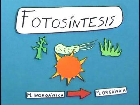 Cómo se desarrolla la #fotosíntesis