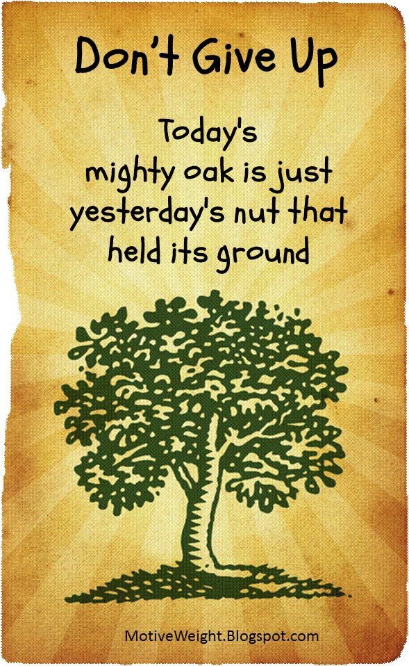 don't give up | Don't give up. Today's mighty oak is ...