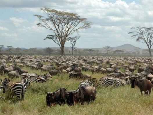 The Serengeti Great Migration... #1 on my list...