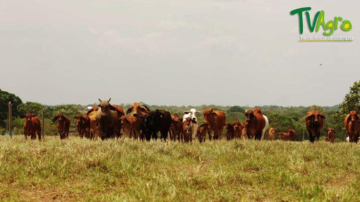 """""""La Sierra"""" Un ejemplo de estudio, pasión y progreso en ganadería."""