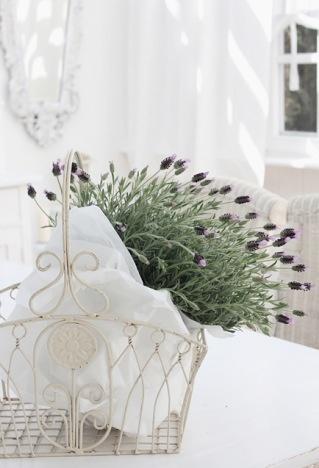 Lavendel mit seinem zarten Duft bringt den Sommer in jeden Raum #lavendel #lavender #pflanzenfreude