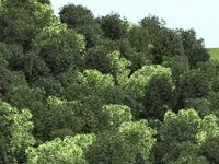 3d forest