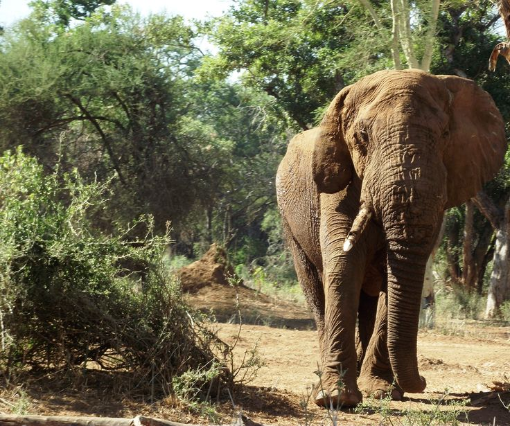 The gentle giant of Africa