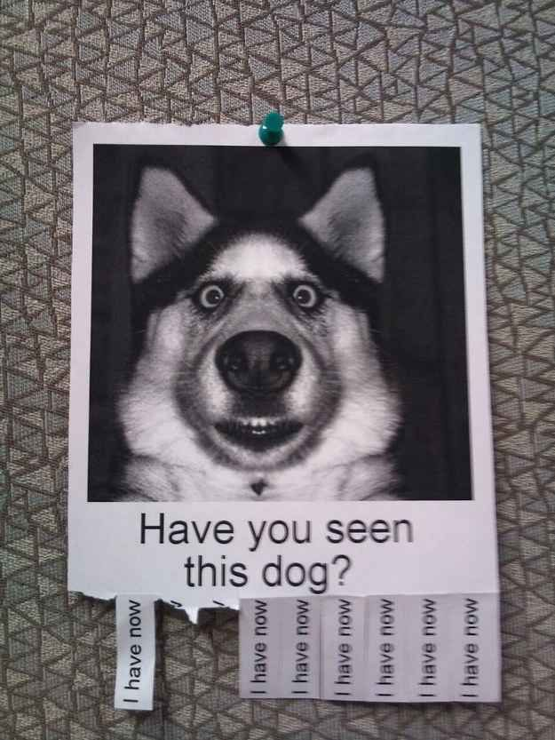 Have you seen this dog? | 26 Things That Will Turn Your Bad Day Around In An Instant