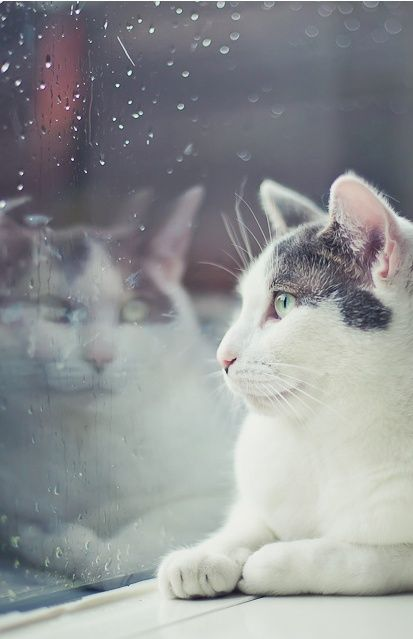best cat on rainy day images rainy days  kitty s reflection on the rainy window
