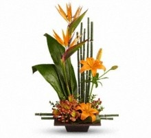 Exotic Grace, Father's Day Flowers, Father's Day Plants, Gifts for Father's Day from Allen's Flower Market of Reseda, CA.  http://www.allensflowermarketonline.com/exotic-grace/
