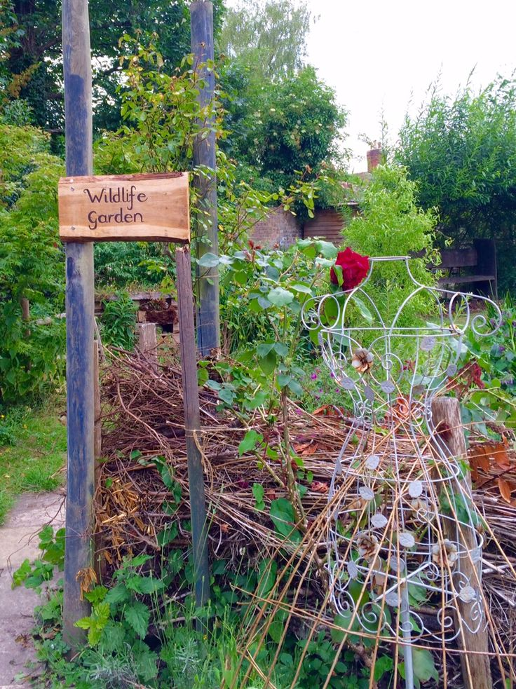 What do you consider to be a 'wildlife garden'? Do you think it means weeds and untidiness? Or a great deal of hard work? In fact, a wildlife garden can be smart or scruffy. It...