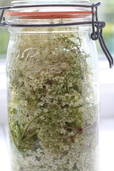 Image result for homemade elderflower gin