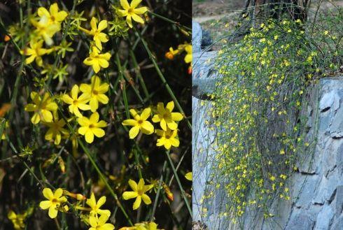 Télen virágzó kerti növények - Szépzöld