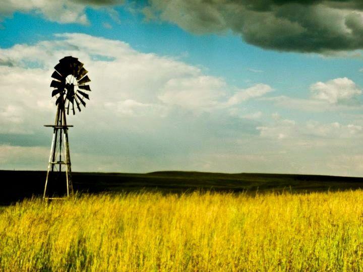 Lekker op die plaas #mooikransequus #perde