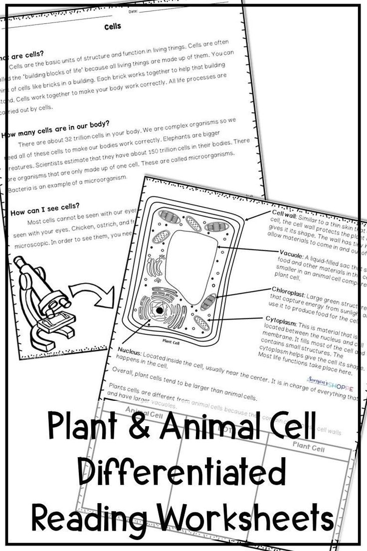 Cell theory Worksheet 7th Grade Plant and Animal Cells