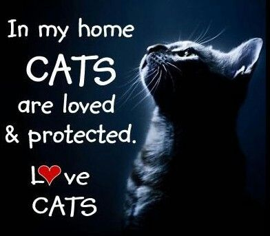 In my home CATS are loved and protected.